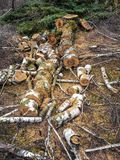 Houthakker, bomen vellen, houten die stukken, besnoeiingsbomen aan lengte van gezaagd worden gesneden stock afbeeldingen