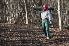 Houthakkershouthakker met kettingzaag dragende binnen logboeken van grote boom stock foto