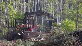 Houtlading, houtverwerking, ontbossing, houtlading met een klauw stock footage