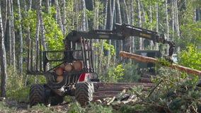 Houtlading, houtverwerking, ontbossing, houtlading met een klauw stock videobeelden