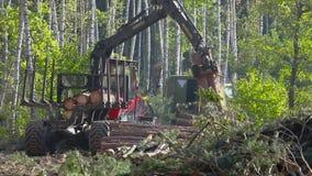 Houtlading, houtverwerking, ontbossing, houtlading met een klauw stock video