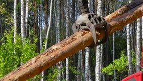 Houtlading, ladingslogboeken in een vrachtwagen, houtverwerking, ontbossing, houtlading met een klauw stock footage