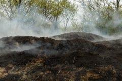Houtskool die in de bossen van Istanboel maken royalty-vrije stock foto