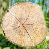 Houttextuur en boomstam op de groene achtergrond van het grasonduidelijke beeld Royalty-vrije Stock Foto