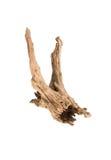 Houttextuur en termietschade Royalty-vrije Stock Fotografie