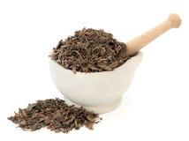 Houttuynia Herb Stock Image