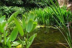Houtvijver met vegetatie Royalty-vrije Stock Afbeeldingen