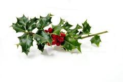 Houx de Noël Images libres de droits