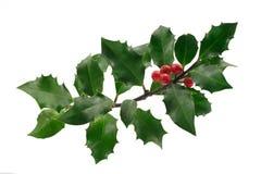 Houx de Noël Photographie stock libre de droits