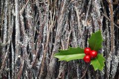 Houx de Noël sur la pile des branches Images stock