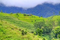 Hovel on mountains mist Stock Photography