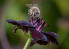 hover мухы Стоковое Изображение