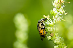 Hover files or fruit files in green nature Royalty Free Stock Photography