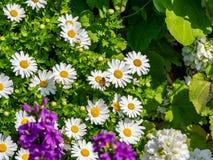 Hoverfly σε έναν ιαπωνικό κήπο 1 στοκ εικόνα