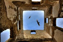 Hovering eagles. Eagles hovering over the ancient ruins Stock Photography