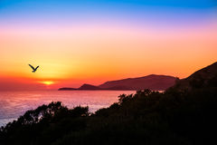 Hovering raptor with a beautiful sunset over the ocean Royalty Free Stock Images