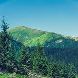 Hoverla -高山在乌克兰 库存图片