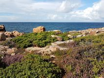 Hovs Hallar,瑞典, Westcoast的岩石沿海风景的一个典型的图象与开花的石南花的在最前面 图库摄影