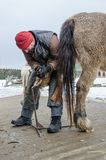 Hovslagaren justerar klövarna av hästen royaltyfri fotografi