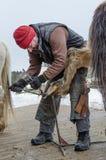 Hovslagaren justerar klövarna av hästen royaltyfri foto