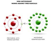 How antioxidant works. Against free radicals. Antioxidant donates missing electron to Free radical stock illustration