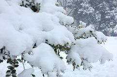 How beautiful the snow Royalty Free Stock Photo