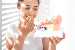 How is made the human ear?. The girl is watching a model of the human auditory stock photography
