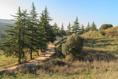 How nice it is to take the road among the cypresses.  royalty free stock photo