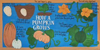 How A Pumpkin Grows Stock Image