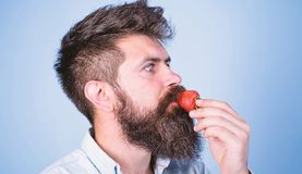 That is how tastes summer. Strawberry healthy snack. Man handsome hipster with long beard eating strawberry. Berries stock photos