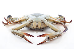 How to buying. Fresh blue crabs Royalty Free Stock Images