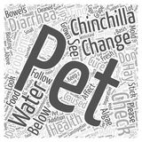 How To Cure Some Health Problems of Your Pet Chinchilla word cloud concept word cloud concept vector background. Text Stock Photo