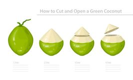 How to Cut and Open a Green Young Coconut. Step-by-Step Instruction. Vector stock illustration