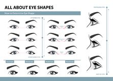 How to determine Eye Shape. Various types of female eyes. Set of vector illustrations with captions. Template for Makeup