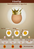 How to determine if an egg is fresh. Vector of How to determine if an egg is fresh Royalty Free Stock Photo