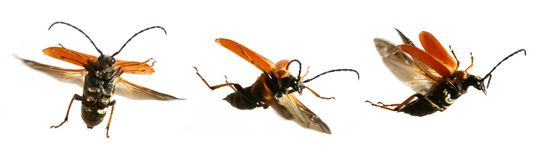 How to flying bugs Royalty Free Stock Photo