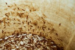 Moths or termites in a water tank royalty free stock images