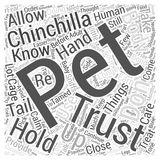 How To Get Your Chinchilla To Trust You word cloud concept word cloud concept  background Stock Photos