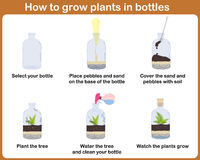 How to grow plants in bottles. Terrariums with tree Royalty Free Stock Images