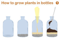 How to grow plants in bottles. Terrariums with tree Royalty Free Stock Photography