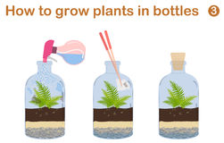 How to grow plants in bottles. Terrariums with tree Stock Photography