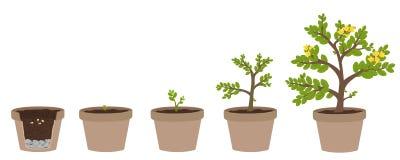 How to grow plants. Stock Photos