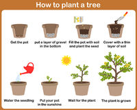 How to grow plants. Easy step by step for kids Stock Photo