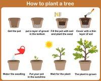 How to grow plants. Stock Photo