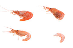 How to peel Shrimps Stock Image