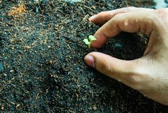 Plant. How to plant seedlings growth stock image