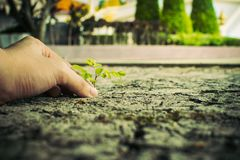 Plant. How to plant seedlings growth royalty free stock photography