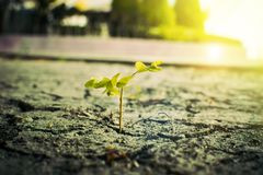 Plant. How to plant seedlings growth stock photos