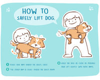 How to safely lift and carry large dog. Demonstrate how to safely lift dog cartoon style Stock Image