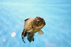 Howard the Fish Royalty Free Stock Images
